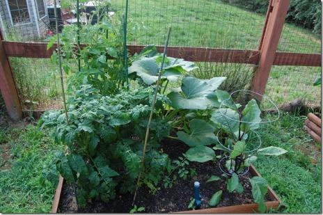 garden 2 - 1 month